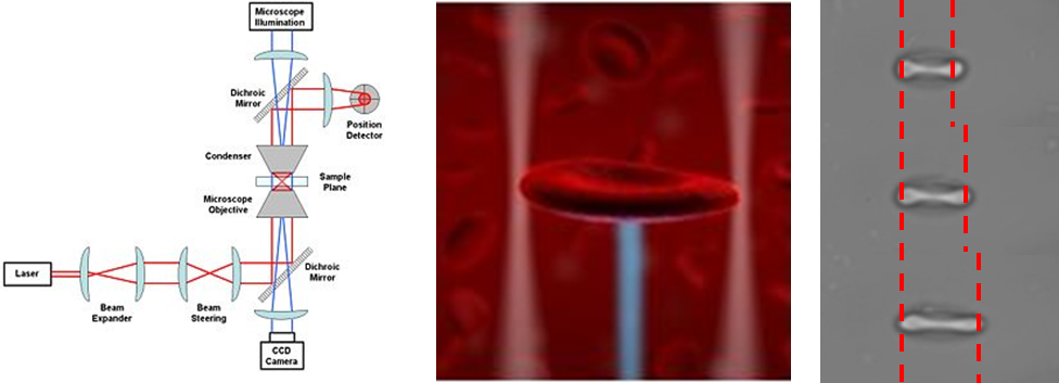 Figure: Schematic representation of an optical tweezers setup, artist impression of optical manipulation of a red blood cell, and an actual experiment in which a red blood cell is â??stretchedâ??.